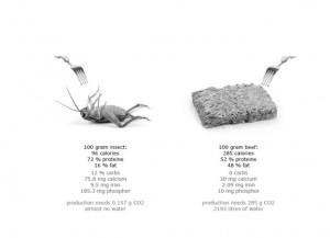 comparaison nutritive entre mouche et viande