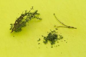 Prélevez les feuilles de thym