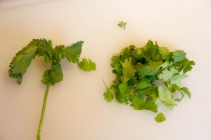 Détachez les feuilles de coriandre de leurs tiges